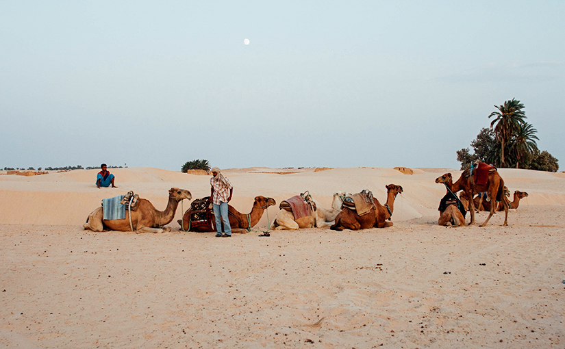 Тунис. Поездка в Сахару.