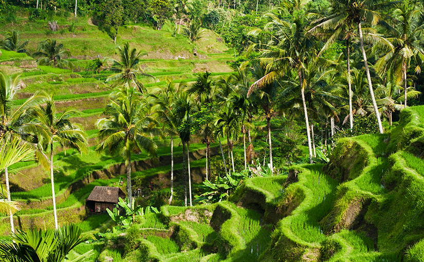 Культура и жизнь острова Бали.