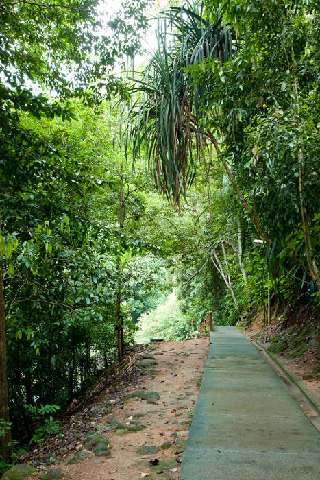Лес на острове Лангкави. Малайзия.