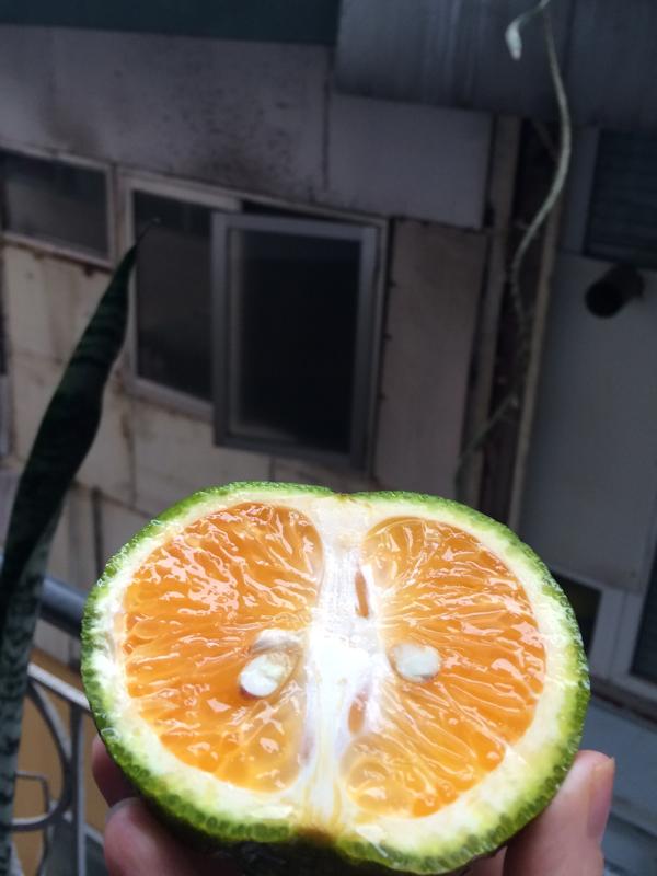 Фрукты Вьетнама: Зеленый Апельсин