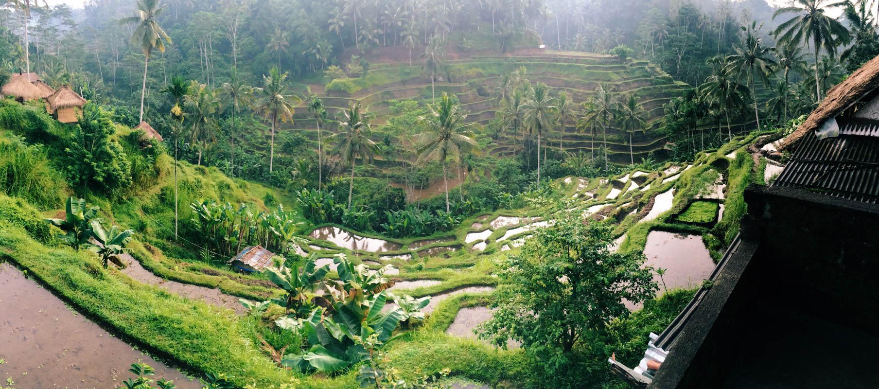 Бали для бюджетного туриста: Рисовые террасы