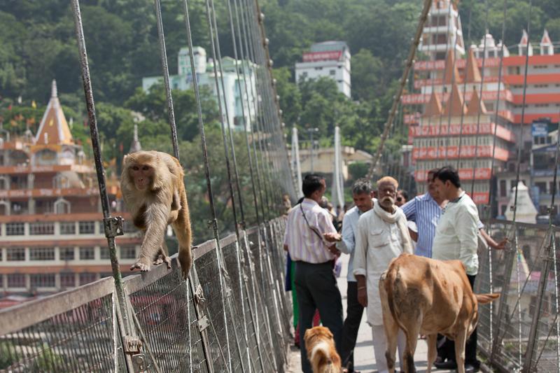 """Путешествие по Индии: """"Трафик"""" на мосту Lakshman Jhula"""