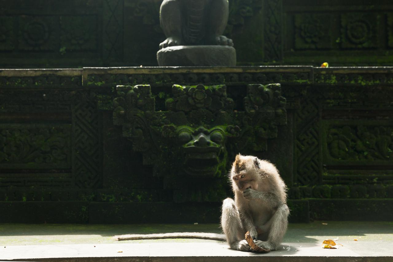 Обезьяна в храме в Лесу Обезьян, Убуд, Бали, Индонезия