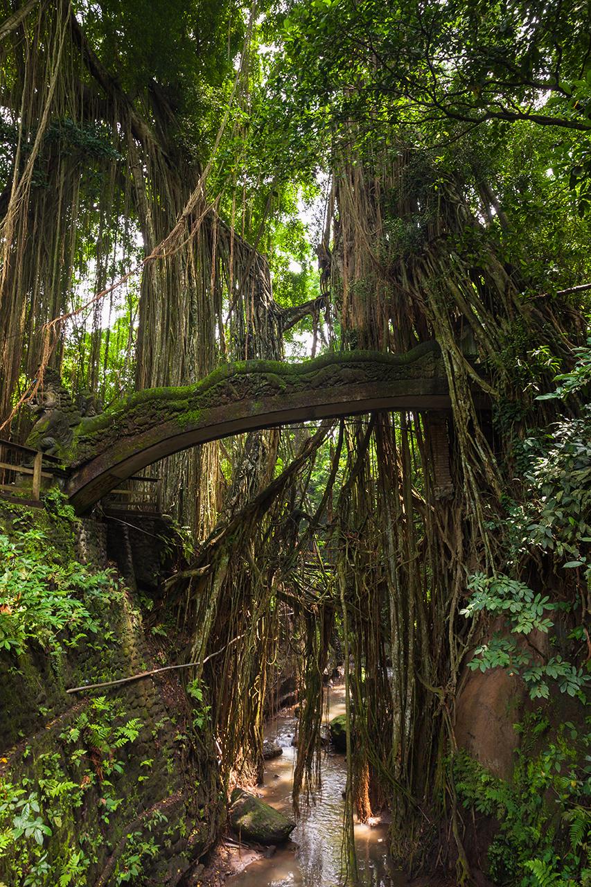 Мост, оплетенный корнями тропических деревьев в Лесу Обезьян, Убуд, Бали, Индонезия