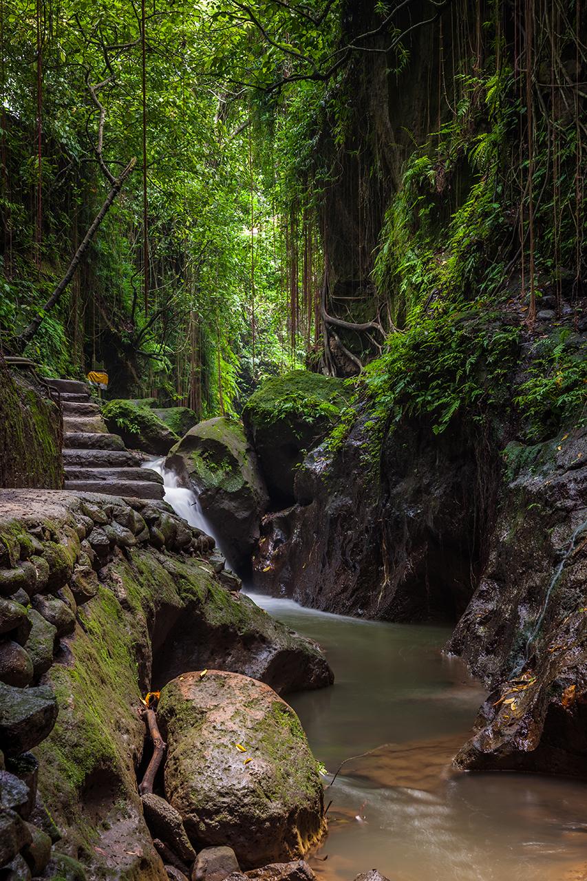 Лес обезьян в Убуде, Бали, Индонезия