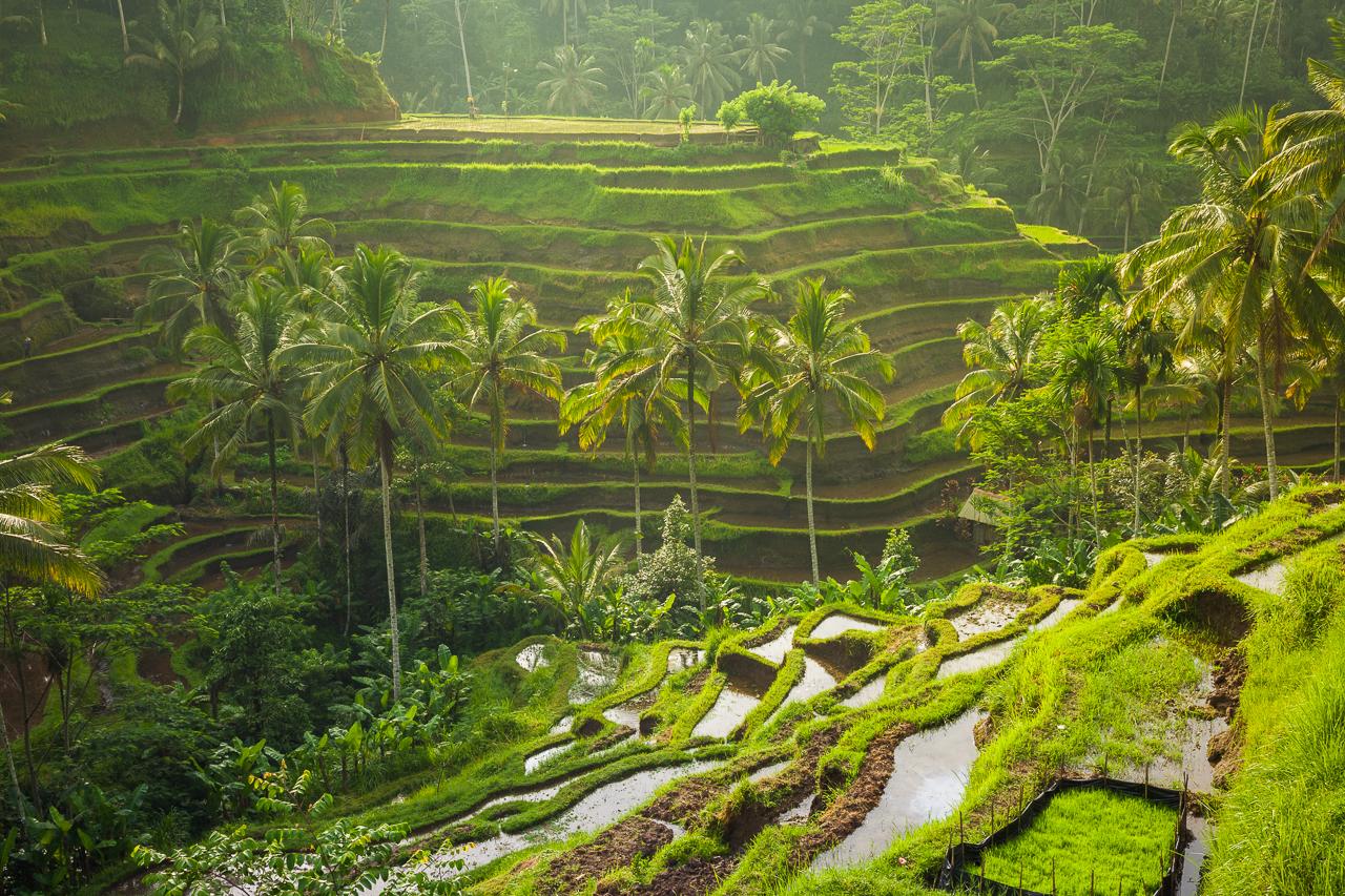 Балийская система ирригации рисовых полей входит в Список Всемирного Наследия ЮНЕСКО, Бали, Индонезия