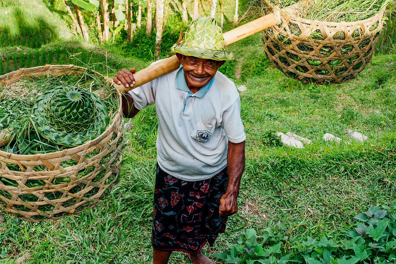 Работник рисовых полей, Бали, Индонезия