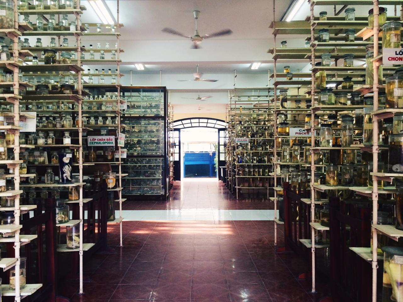 Путешествие по Вьетнаму, Нячанг: Океанографический музей