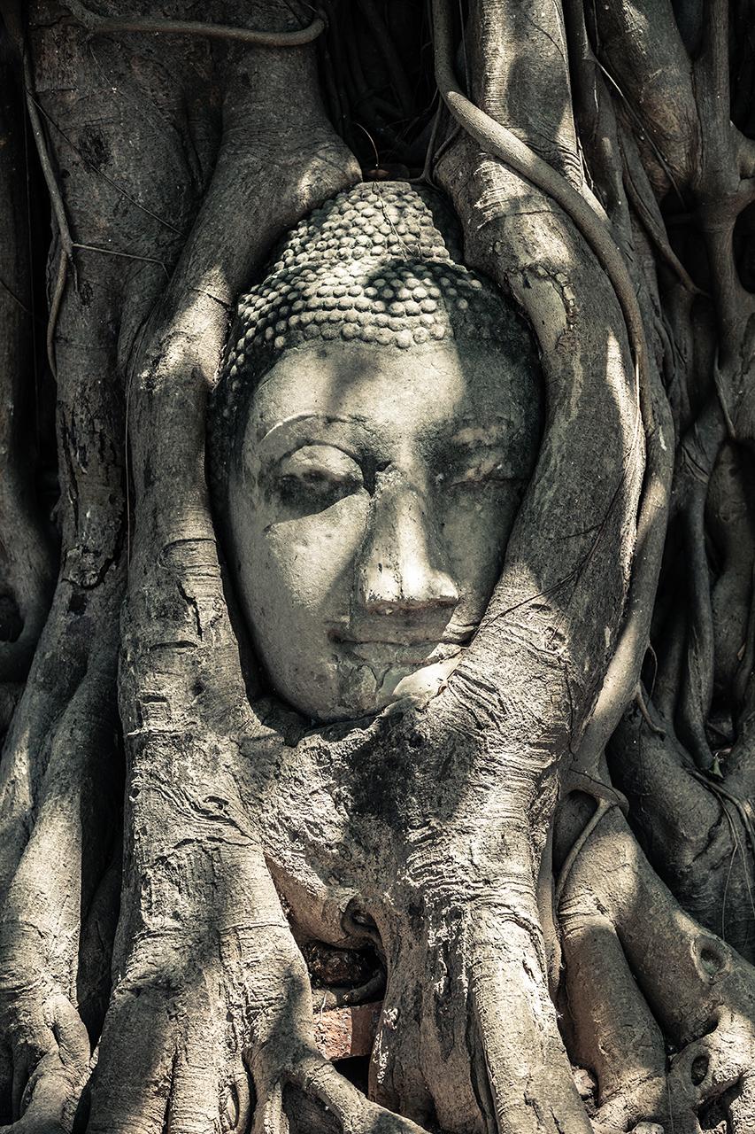 Путешествие по Таиланду, Аюттхая: Голова Будды в корнях
