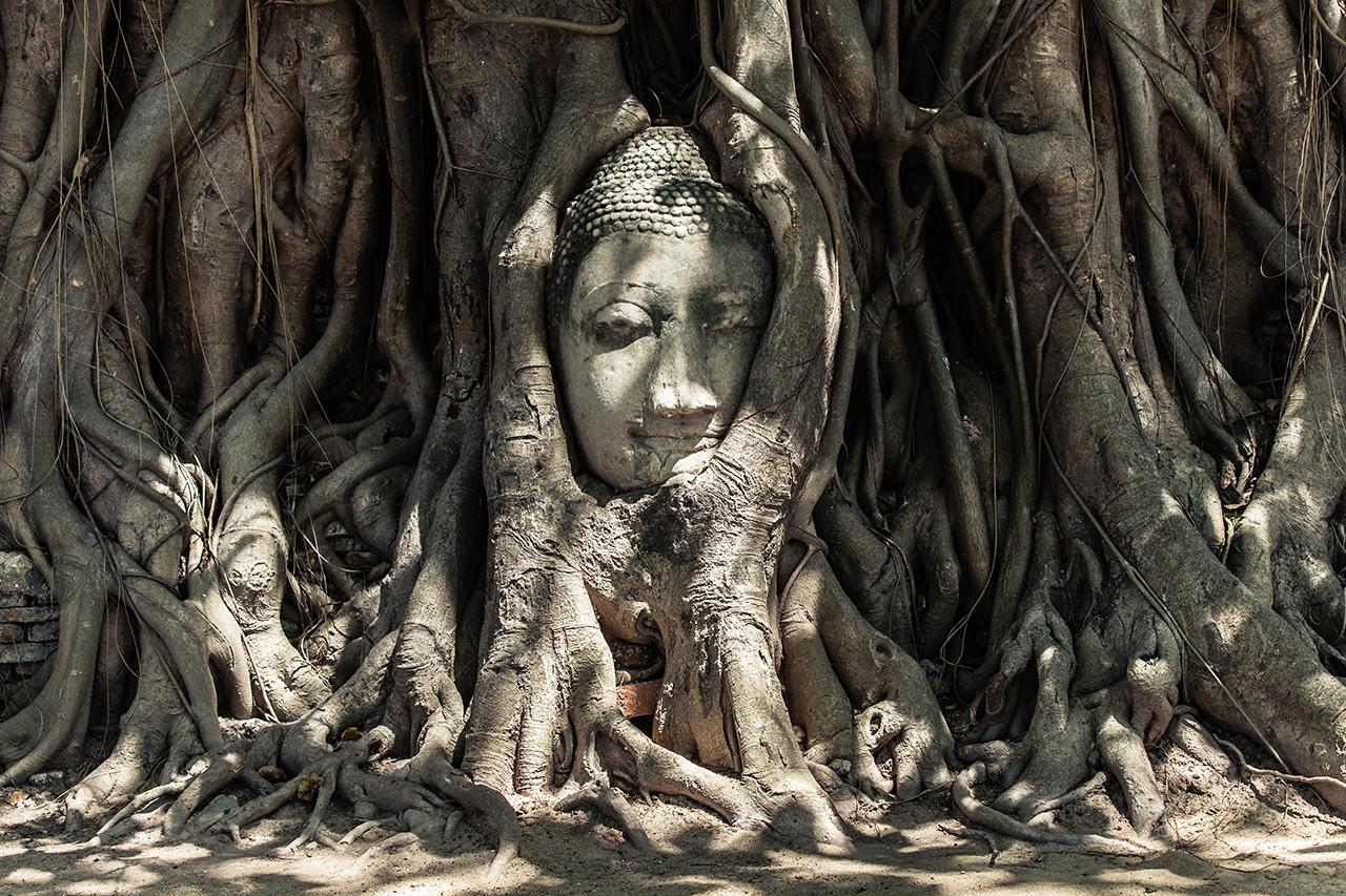 Путешествие по Таиланду, Аюттхая: Голова Будды в храме Ват Махатхат