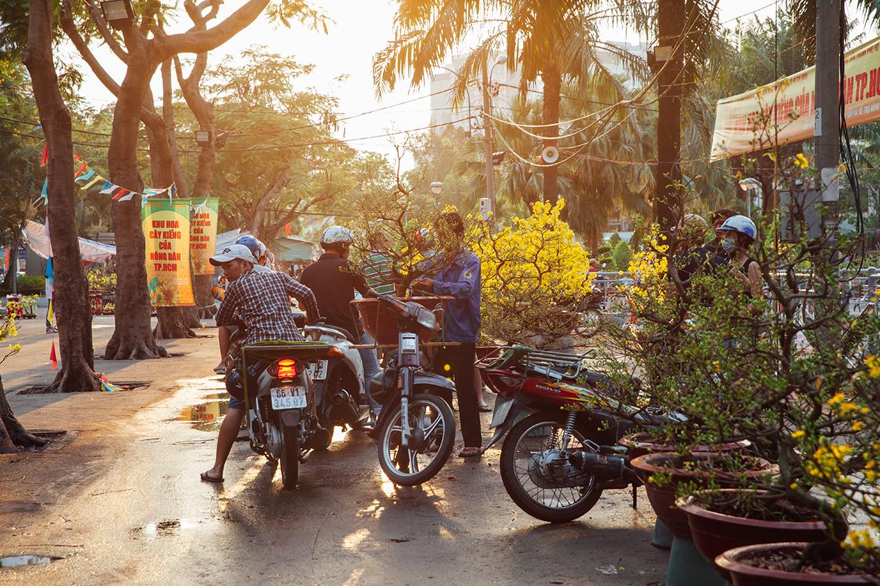 Вьетнамский Новый год: Продажа новогодних деревьев
