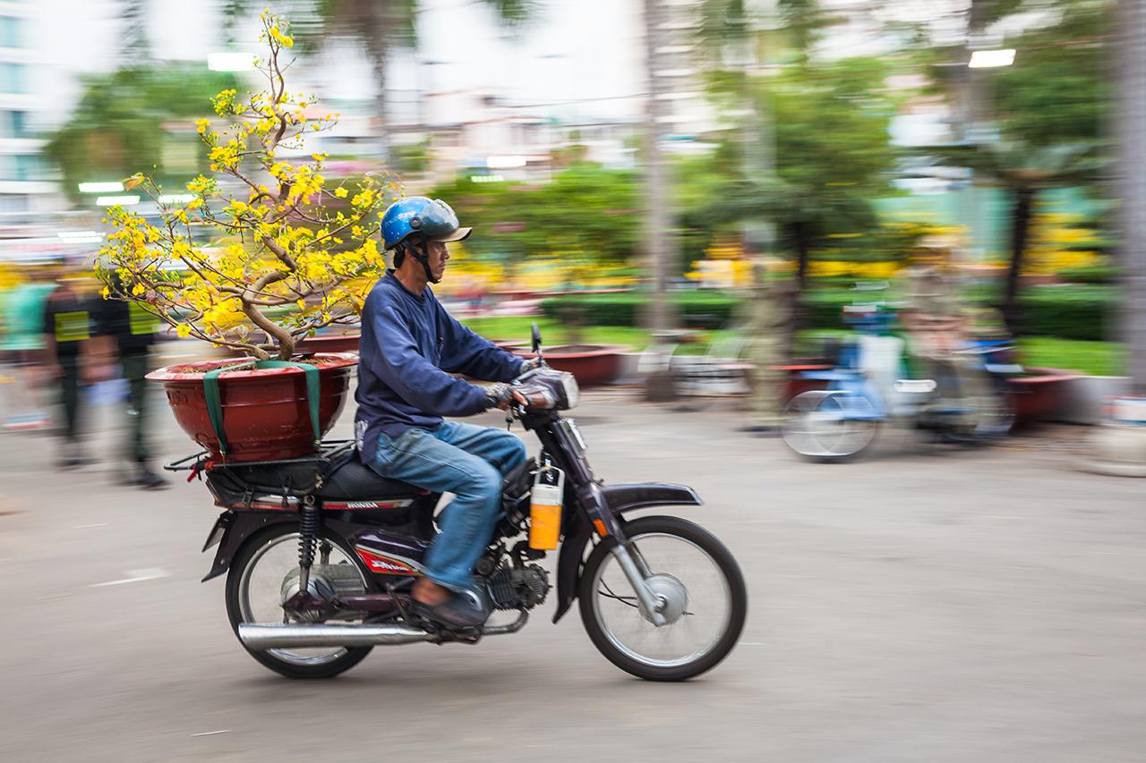 Вьетнамский Новый год: Перевозка новогоднего дерева