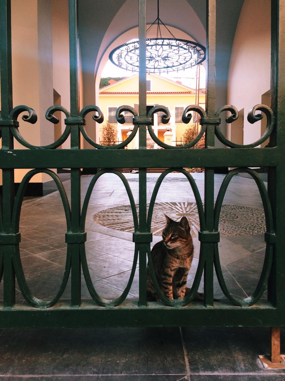 Стоповер в Стамбуле. День 3: Стамбульские котики