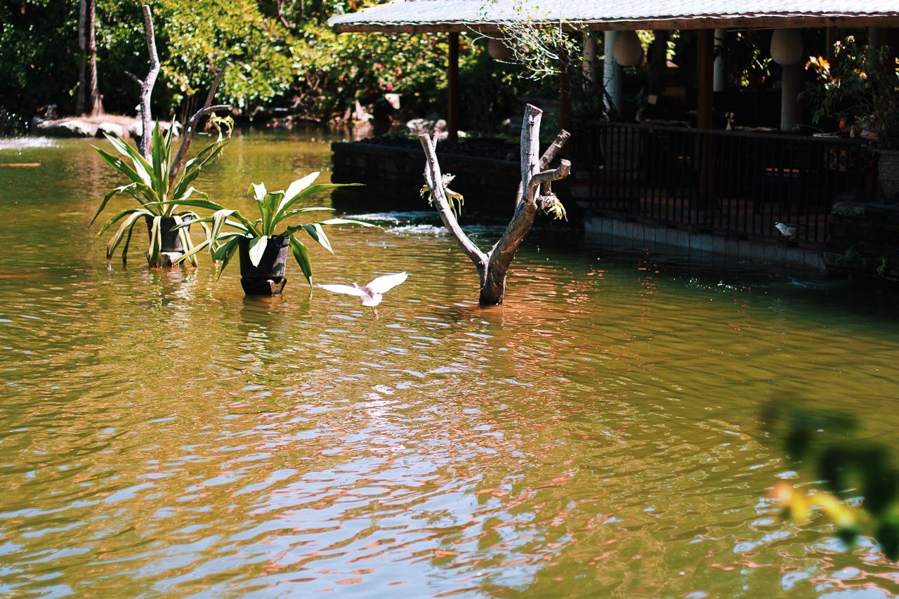 Топ самых классных и необычных отелей, в которых мы побывали: Отель Ayodya, Бали